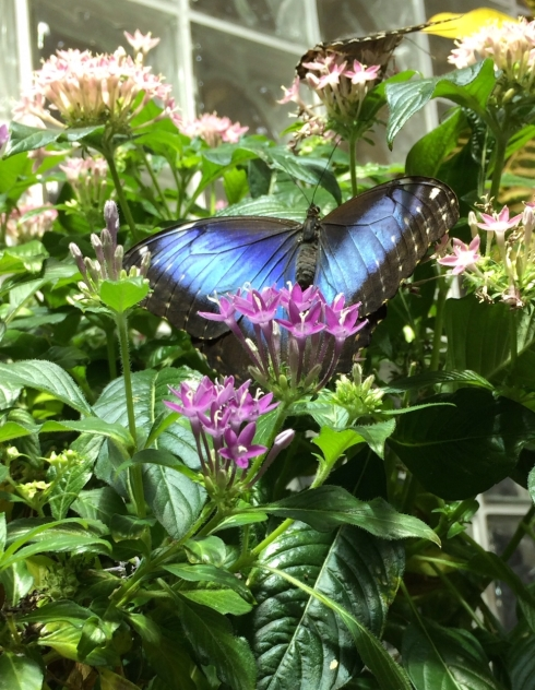 butterfly`