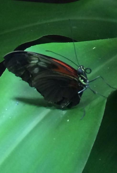 buttterfly1