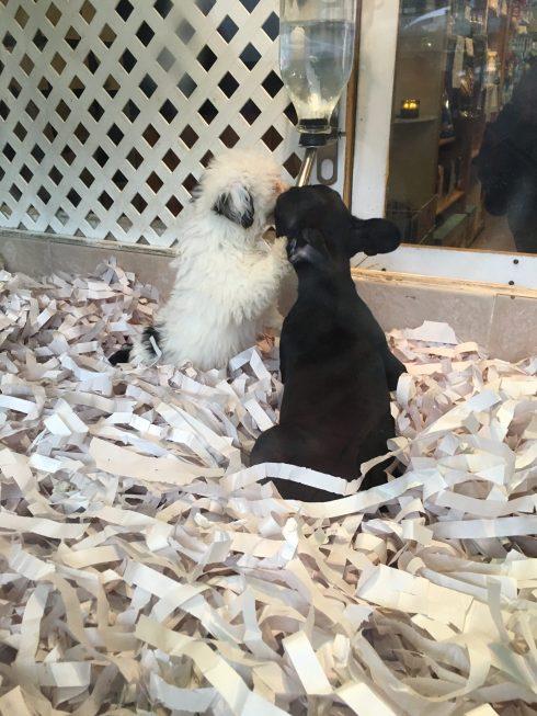 pet shop2