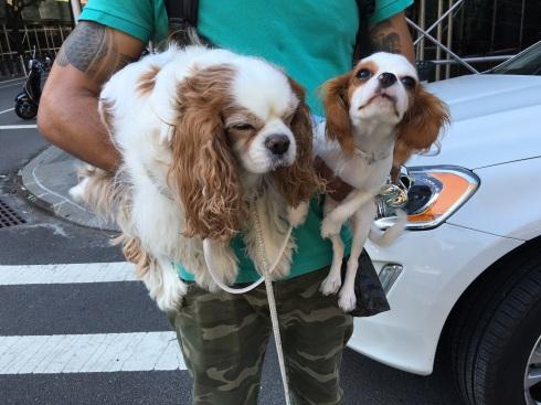 city-dogs3