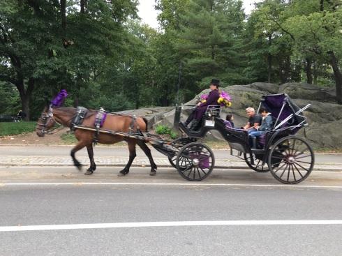 purple-reins