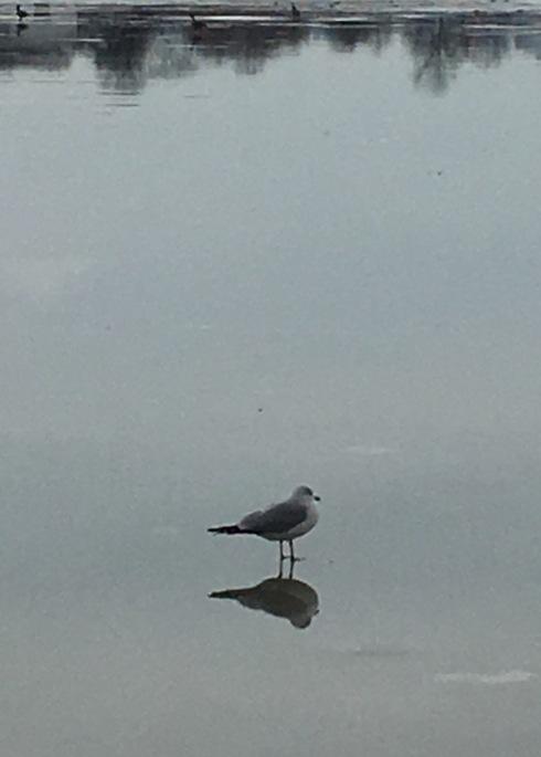 seagul2