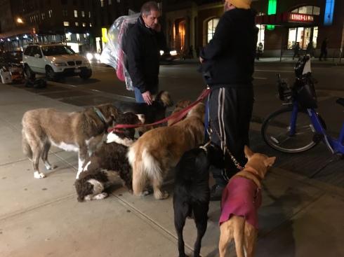 city-dogs12